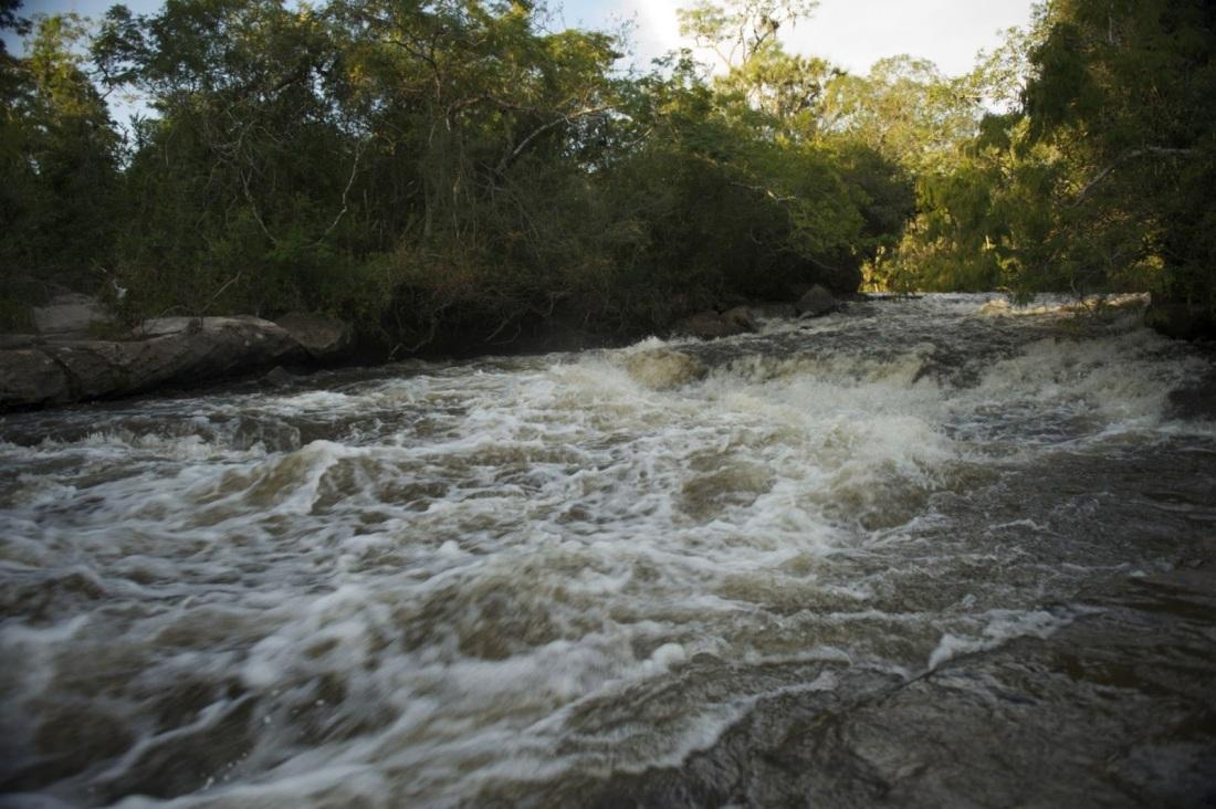 Um rio com corredeiras cercado por floresta